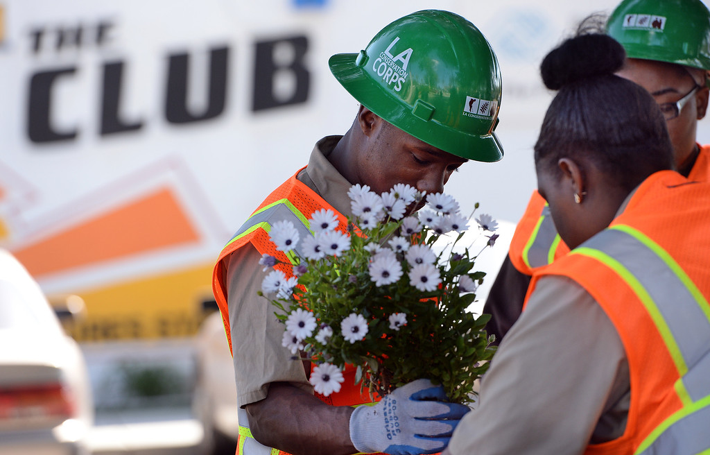 Description of . Los Angeles Conservation Corps volunteer De Anthony Cole, 25, originally from Pomona, brings flowers to a table so they can be replanted Monday during a beautification project at the Boys and Girls Club of Pomona Valley Monday. Approximately 40 volunteers including staffers of L.A. County Supervisor Gloria Molina's office, along with members of the Los Angeles Conservation Corps and some Chavez Week volunteers were at the Boys and Girls Club of Pomona Valley on Monday March 31, 2014 as a part of a beautification project.  (Will Lester/Inland Valley Daily Bulletin)