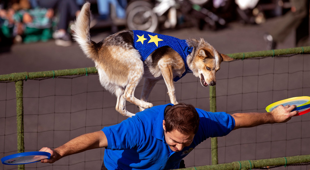 Description of . A dog performs a trick with a trainer on the Lucy Pet Foundation Inc.
