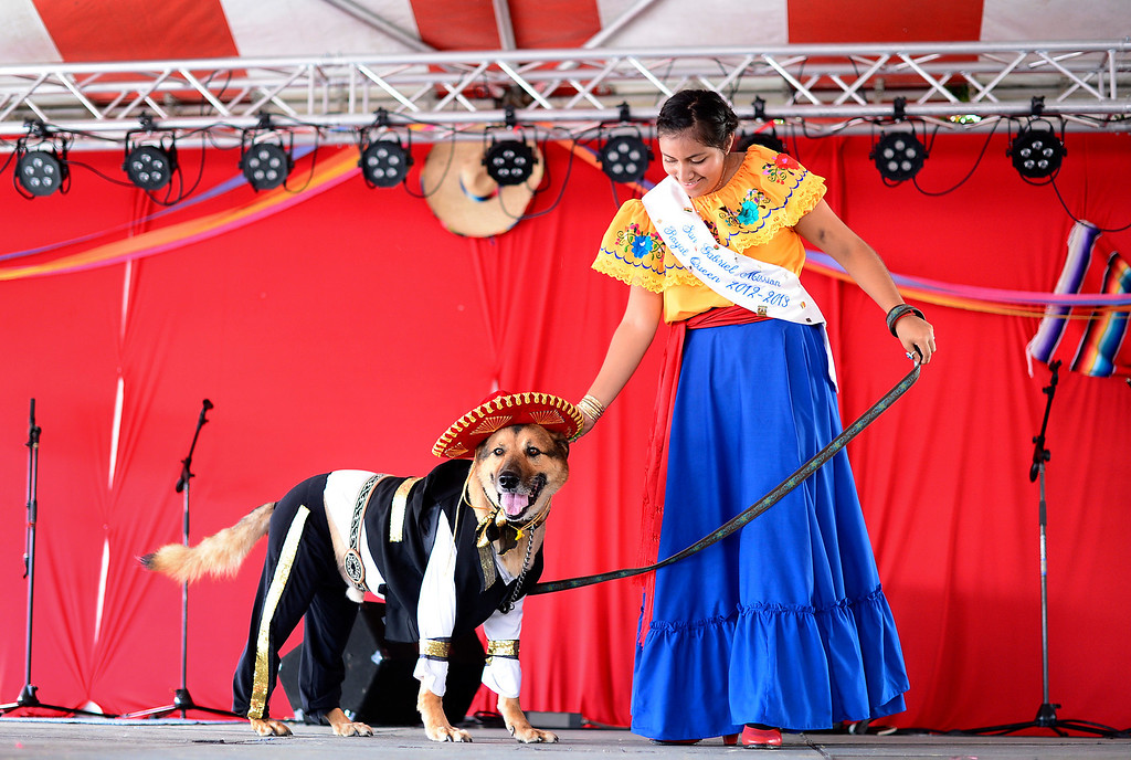 Description of . The 2013 San Gabriel Mission Queen Francella Fierro, 17,  enters her dog Lou, dressed as a Mariachi, into the pet costume contest during their 242nd Annual La Fiesta de San Gabriel Saturday, August 31, 2013 at the San Gabriel Mission. The 10-year-old German Shepherd Rottweiler mix also received a blessing during the Blessing of the Animals by Father Lambert Okere. The fiesta runs through Sunday. (Photo by Sarah Reingewirtz/Pasadena Star-News)