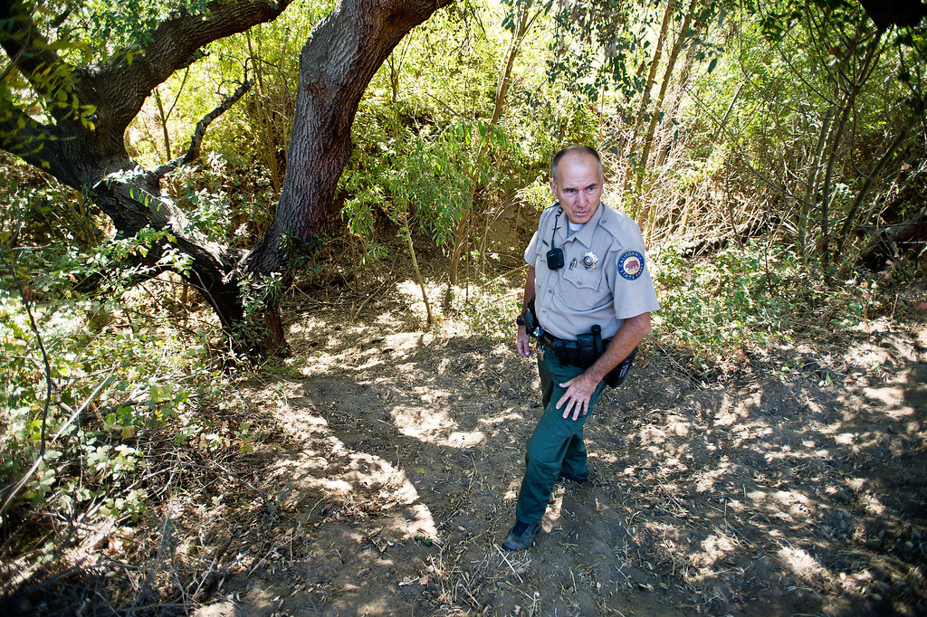 Description of . Ranger Kim Sawyer inspects a creek bed for feral cows during his patrol near Telegraph Road at Chino Hills State Park on Wednesday, Oct. 2, 2013. (Photo by Watchara Phomicinda/San Gabriel Valley Tribune)