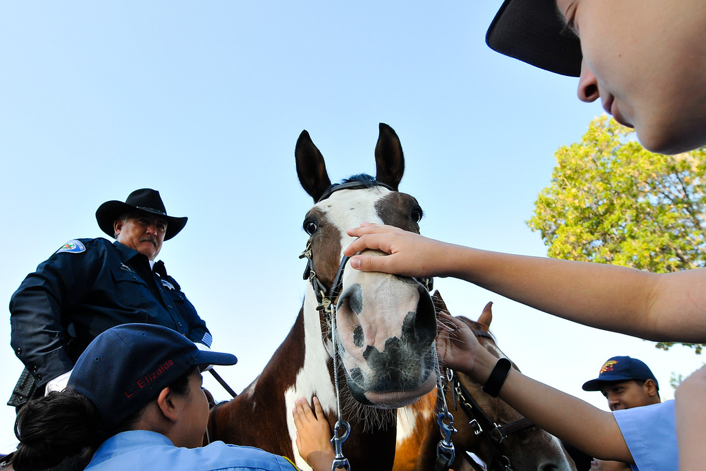 Description of . Cadets visit with a mounted officer's horse following a 9/11 remembrance ceremony at the Public Safety Academy in San Bernardino on Wednesday, Sept. 11, 2013. (Photo by Rachel Luna / San Bernardino Sun)
