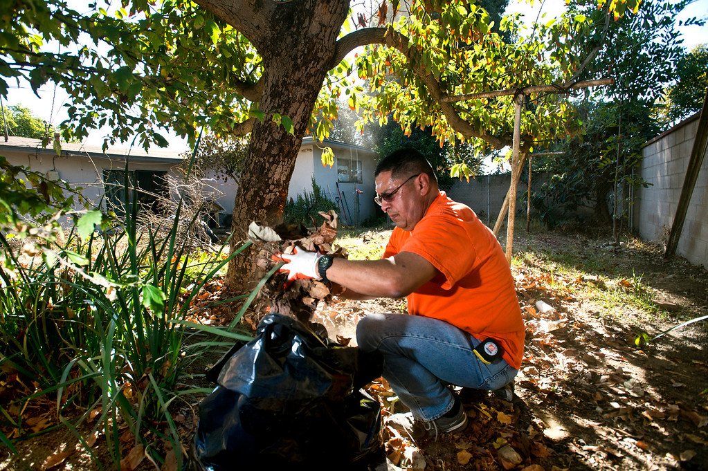 Description of . Joe Alverado, a Home Depot volunteer, helps cleanup the backyard for a veteran, Fidel Sanchez, a member of VFW Post 8070, at his Azusa home on Friday morning, Nov. 8, 2013. (Photo by Watchara Phomicinda/San Gabriel Valley Tribune)