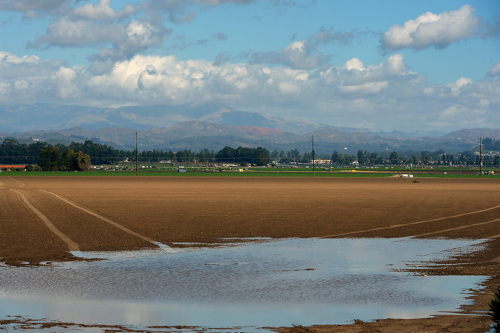 Description of . Rain runoff pools in an agriculture field in Camarillo, Thursday, February 27, 2014. (Photo by Michael Owen Baker/L.A. Daily News)