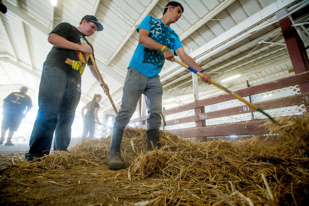 Description of . Tim Creager, left, of Chino FFA, Danielle Butler of Chino FFA and John Kane of Monte Vista Diamonds 4H Club fork hay into stalls as preparations are made for opening day of the San Bernardino County Fair in Victorville, Friday,  May 24 2013. (Eric Reed/The Sun)