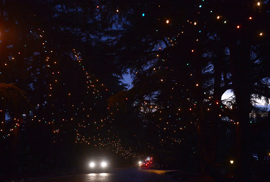 Description of . Vehicles head up Christmas Tree Lane Thursday night, December 19, 2013 in Altadena on Santa Rosa Avenue where the residents light up their Deodar trees for the holidays. (Photo by Sarah Reingewirtz/Pasadena Star-News)