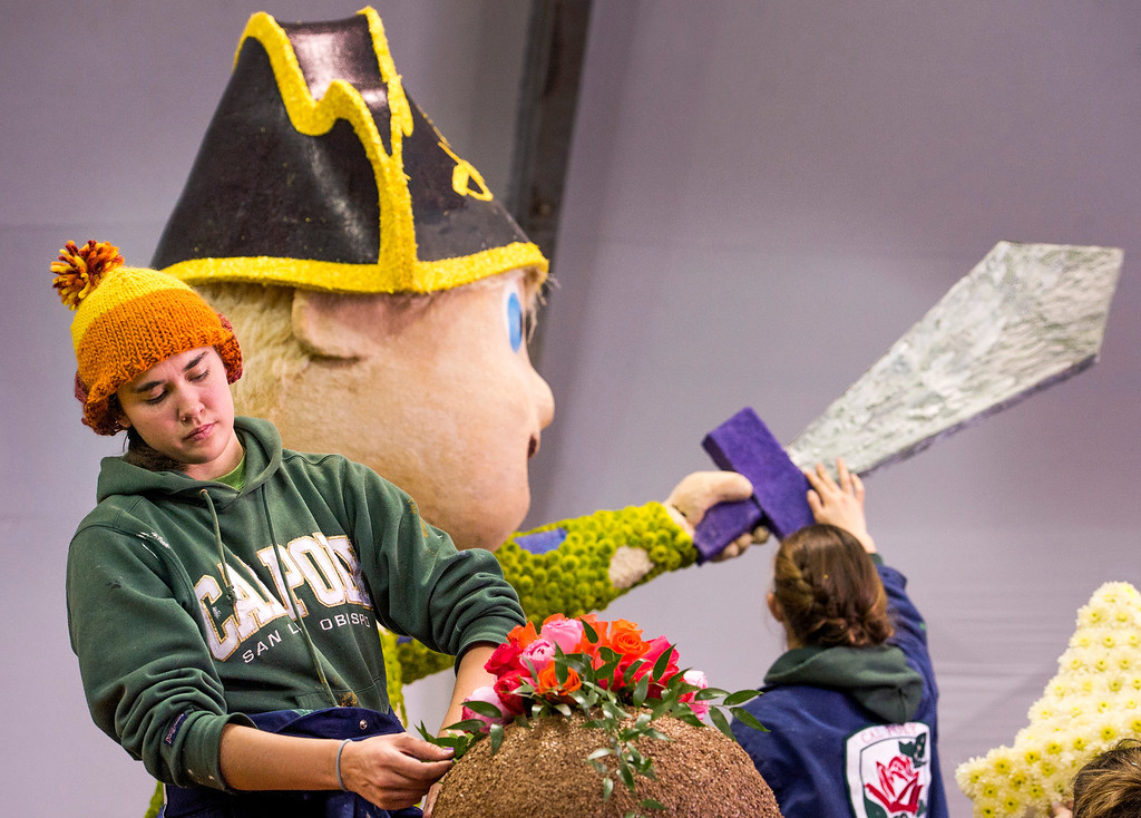 Description of . Cal Poly SLO student Elise Willcox, 20,  applys flowers to the university's Rose Parade float which is a joint venture between the Pomona and San Luis Obispo campuses at the Brookside Pavilion in Pasadena, Calif. Dec. 30, 2013.   (Staff photo by Leo Jarzomb/Pasadena Star-News)
