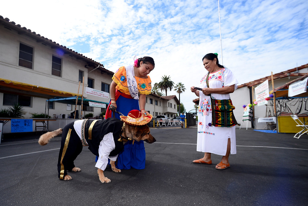 Description of . The 2013 San Gabriel Mission Queen Francella Fierro, 17,   and her mom Melita Resendiz prepare to enter her dog Lou, dressed as a Mariachi, into the pet costume contest during their 242nd Annual La Fiesta de San Gabriel Saturday, August 31, 2013 at the San Gabriel Mission. The 10-year-old German Shepherd Rottweiler mix also received a blessing during the Blessing of the Animals by Father Lambert Okere. The fiesta runs through Sunday. (Photo by Sarah Reingewirtz/Pasadena Star-News)