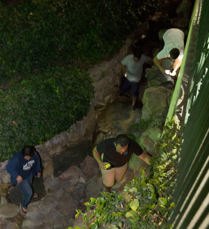 Description of . Cash hunters search all over Penn Park in Whittier for #HiddenCash stashed in Pez dipsensers and lunch boxes in the park bushes on Thursday July 10, 2014. Hundreds of people searched through the bushes all over the park. (Staff Photo by Keith Durflinger/Pasadena Star-News)