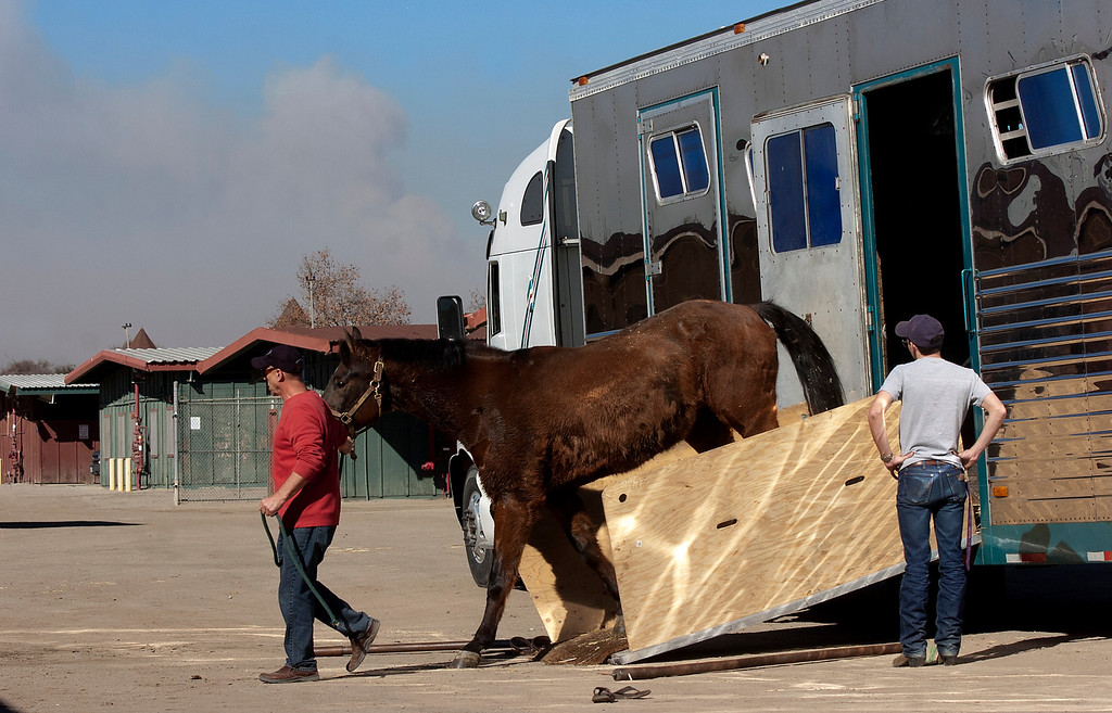 Description of . Volunteers help unload horses at Fairplex in Pomona, CA., Thursday, January 16, 2014. Eighty horses were evacuated from Ranbow Canyon Ranch because of the Colby Fire.