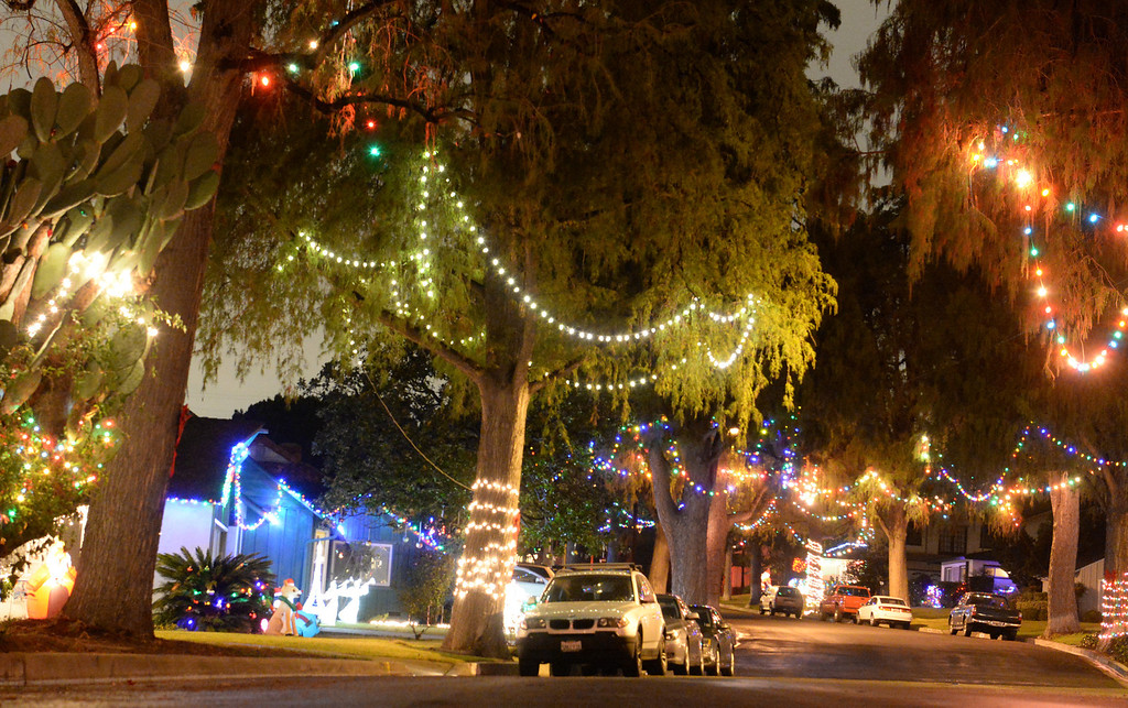 Description of . Neighbors decorate the trees that line the 14400-block of Eastridge Drive in Whittier on Thursday December 19, 2013. (Photo by Keith Durflinger/Whittier Daily News)