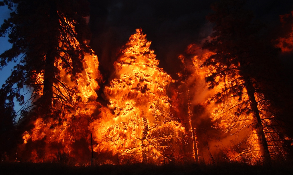Description of . Ten years ago this month the arson caused Old Fire, fanned by Santa Ana winds burned thousands of acres, destroyed hundreds of homes and caused six deaths. The fire burned homes in San Bernardino, Highland, Cedar Glen, Crestline, Running Springs and Lake Arrowhead and forced the evacuation of thousand of residents. Trees burn along Highway 18 near Sky Forest during the Old Fire. (Staff file photo/The Sun)