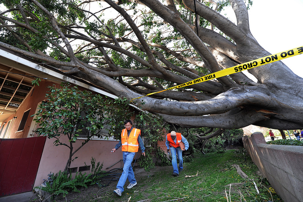 Description of . Officials from Sierra Madre building department examine a home at 90 West Highland Avenue in Sierra Madre, after a tree fell onto the home due to the high winds that have struck the southland.  Gusts were reported to be as high as 85 mph Thursday, December 1, 2011. (SGVN/Staff Photo by Walt Mancini/SXCity)
