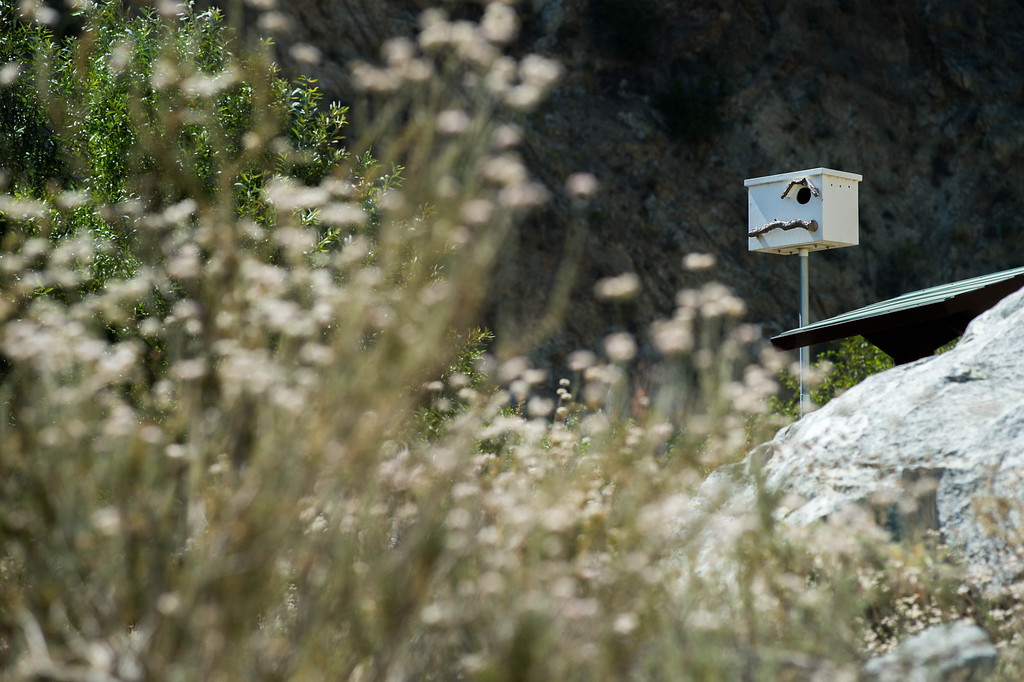 Description of . A barn owl perch along the Fish Canyon Falls Access Trail in Azusa on Wednesday, June 18, 2014. Vulcan have rebuilt the trail and will open it 7 days a week.  (Photo by Watchara Phomicinda/ San Gabriel Valley Tribune)