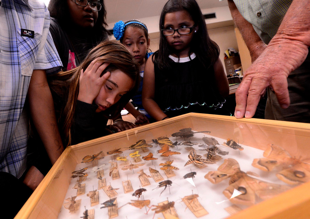 Description of . Entomologist Tim Hayes, hidden right, shows students a box of insects and butterflies during the final day of the 19th Annual Career Awareness Week at Lankershim Elementary School in Highland June 6, 2013.  GABRIEL LUIS ACOSTA/STAFF PHOTOGRAPHER.