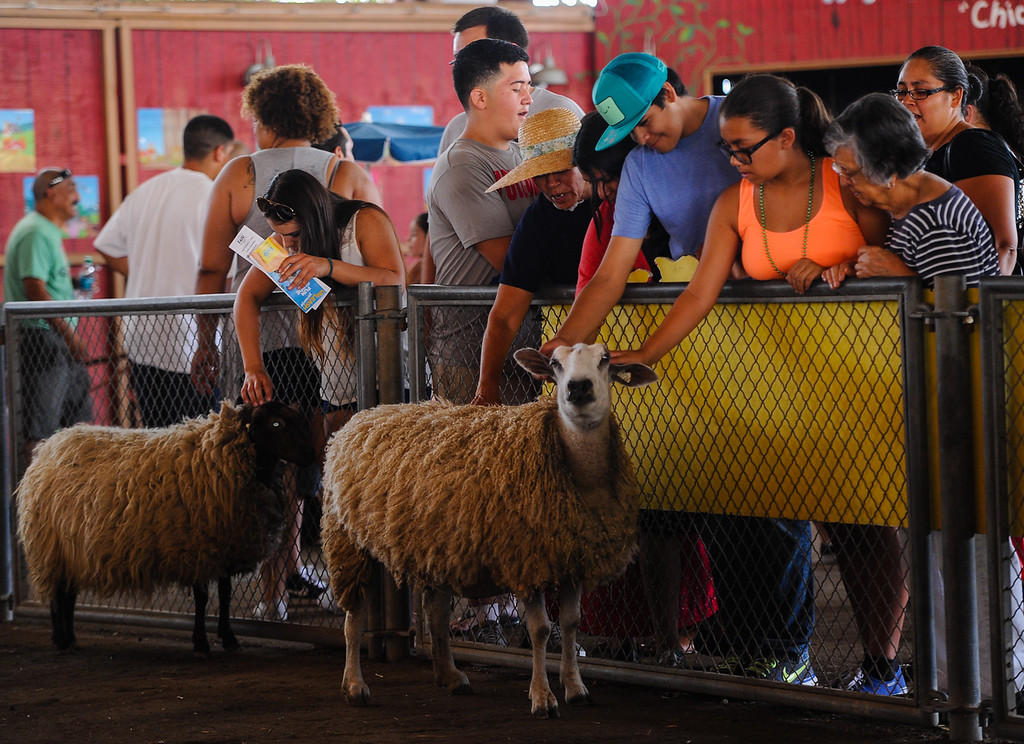 Description of . Fair-goers visit with livestock at the 91st annual Los Angeles County Fair in Pomona on Sept. 2, 2013. The fair will run through September 29. (Rachel Luna / San Bernardino Sun)