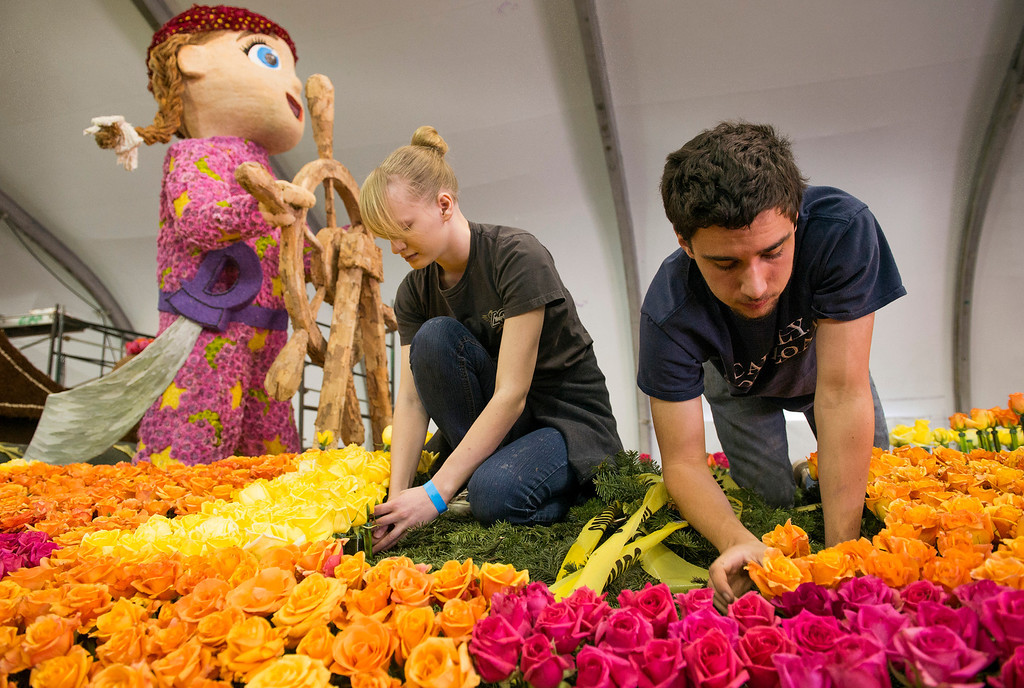 Description of . Cal Poly SLO student Charlie Crowe, 20, right, and volunteer Dana Brough, 16, apply flowers to the university's Rose Parade float which is a joint venture between the Pomona and San Luis Obispo campuses at the Brookside Pavilion in Pasadena, Calif. Dec. 30, 2013.   (Staff photo by Leo Jarzomb/Pasadena Star-News)