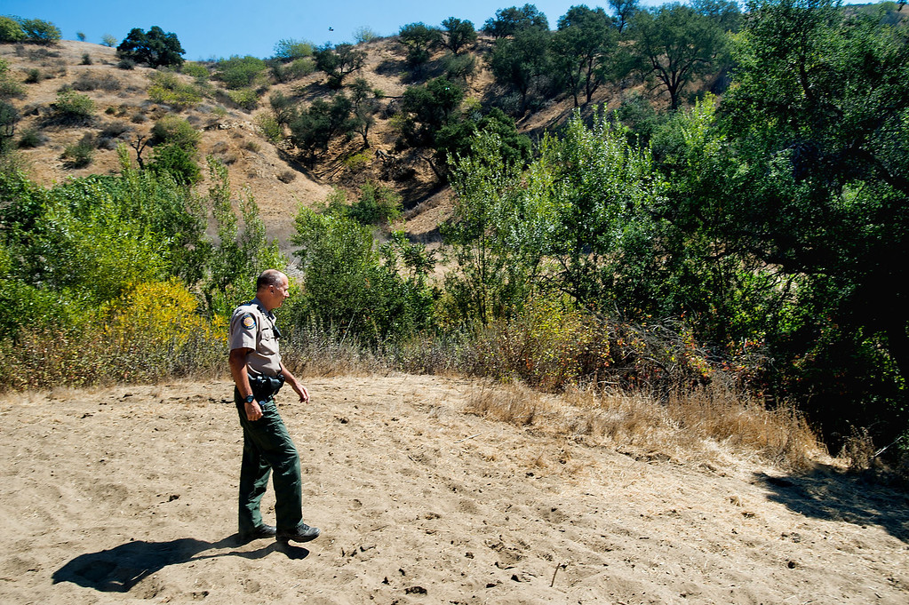 Description of . Ranger Kim stands over grass denuded by feral cows along the hillside near Telegraph Road during his patrol at Chino Hills State Park on Wednesday, Oct. 2, 2013. (Photo by Watchara Phomicinda/San Gabriel Valley Tribune)