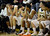 Bishop Montgomery's bench show the difficulty of the last few seconds in the game against La Verne Lutheran in a CIF SS Division IV-AA semifinal game in Torrance Friday night. Lutheran stunned Bishop Montgomery 63-59, ending their unbeaten season. 20130222 Photo by Steve McCrank / Staff Photographer