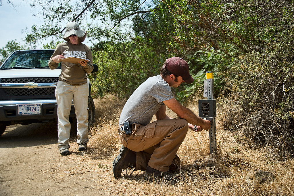 Description of . Field technicians Robert Alonso and Kathy Baumberger, of U.S. Geological Survey, check a bobcat remote camera along Powder Canyon Trail in Rowland Heights on Tuesday, July 2, 2013. Data is being collected on  the bobcats to gauge the population and their roaming territory within the Whittier Hills Nature Preserve. (Staff Photo by Watchara Phomicinda/SGVN)