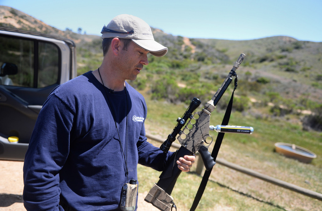 . Wildlife Biologist Calvin Duncan with an air rifle that will deliver a contraceptive-filled dart. Bison contraception program on Catalina Island by the Catalina Island Conservancy. (April 14, 2014. Photo by Brad Graverson/The Daily Breeze)