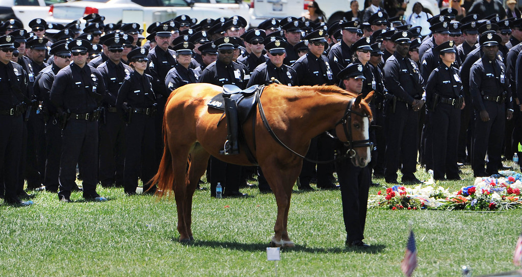 . A riderless LAPD  horse, during burial services for LAPD Officer Roberto Sanchez, at The Good Shepherd Cemetery in Huntington Beach. Sanchez was killed May 3 in a car crash in Harbor City. The Good Shepherd Cemetery in Huntington Beach.   Huntington Beach Calif., Wednesday, May 14,  2014.     (Photo by Stephen Carr / Daily Breeze)