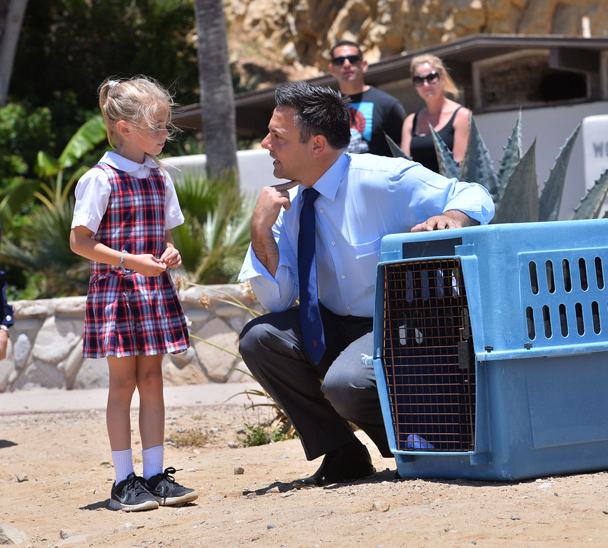 """. L.A. Councilman Joe Buscaino explains to Marin Marnani, 6, where the pelican was injured by pointing to his neck. The pelican named \""""Pink\"""" was rehabilitated at the International Bird Rescue center which repaired the bird\'s slashed pouch in a series of surgeries. Today at White\'s Point it was released. Photo by Brad Graverson/The Daily Breeze/ 6-3-14"""