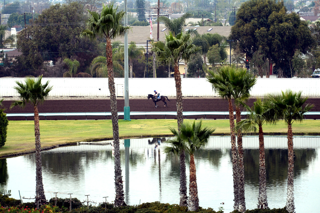 . The  Los Alamitos Race Course,  as quarter horses training during a morning session.  The race course will add thoroughbred racing next year to compensate for loss of the closed Hollywood Park Racetrack.   Los Alamitos, Calif. Wednesday December 18, 2013.   (Photo by Stephen Carr / Daily Breeze)