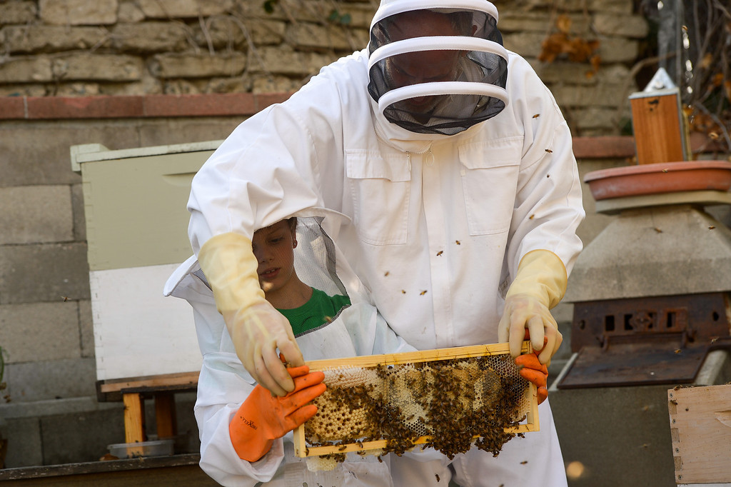 . David Bock hands a beehive frame with bees and honeycomb to his son, Simon, 8, Tuesday, February 25, 2014. (Photo by Michael Owen Baker/L.A. Daily News)