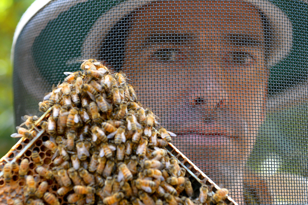. David Jefferson checks beehives in his families\' avocado orchard in Somis, Tuesday, February 11, 2014. Jefferson is president of Bloom Honey, a Thousand Oaks-based raw honey purveyor with more than 1,000 beehives in California, Nevada and Arizona.  Jefferson, whose family has large avocado and citrus farms in Ventura County, is preparing some hives to move to the Central Valley, where they will pollinate the state\'s almond crop. (Photo by Michael Owen Baker/L.A. Daily News)