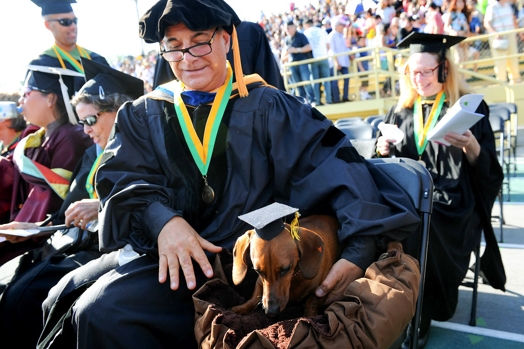 """. Sociology teacher Michael Vivian and his dog \""""Izzie Schnauppsie\"""" take a seat at the Los Angeles Valley College graduation, Tuesday, June 10, 2014. (Photo by Michael Owen Baker/Los Angeles Daily News)"""