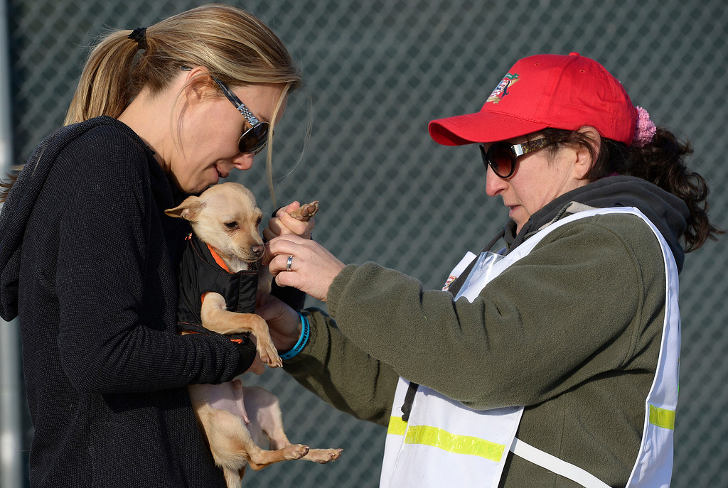 . (l-r) Cassandra Mann and Evelyn Alexander put a sweater on a small dog. Volunteers at Van Nuys airport loaded over 400 animals onto 14 private planes so that they could go to new homes all over the Pacific Northwest. The non-profit organization Wings of Rescue is in its 3rd year of finding homes for dogs and cats that would otherwise be put down. Van Nuys, CA. 12/5/2013, photo by (John McCoy/Los Angeles Daily News)