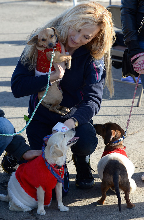 . Carolyn Monett plays with dogs that were dressed up in Santa outfits to keep them warm on their trip to Montana. Volunteers at Van Nuys airport loaded over 400 animals onto 14 private planes so that they could go to new homes all over the Pacific Northwest. The non-profit organization Wings of Rescue is in its 3rd year of finding homes for dogs and cats that would otherwise be put down. Van Nuys, CA. 12/5/2013, photo by (John McCoy/Los Angeles Daily News)