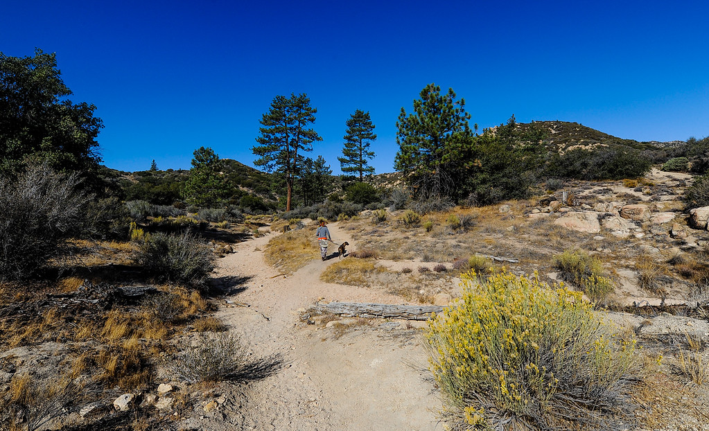 . View of the Pinnacle Trail as efforts to find a missing German hiker continue in the San Bernardino Mountains near Lake Arrowhead on Friday, Oct. 4, 2013. Alyof Krost, 62, went missing Tuesday afternoon after hiking with a group of 20 people on the Pinnacle Trail near Lake Arrowhead. (Photo by Rachel Luna / San Bernardino Sun)