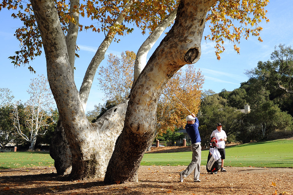 . Zach Johnson hits from under a tree during the final round of the Northwestern Mutual World Challenge golf tournament at Sherwood Country Club, Sunday December 8, 2013, in Thousand Oaks, Calif.(Andy Holzman/Los Angeles Daily News)