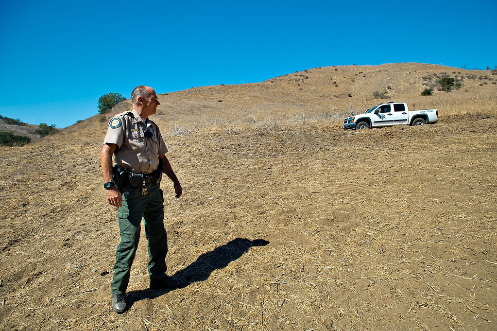 . Ranger Kim stands over grass denuded by feral cows along the hillside near Telegraph Road during his patrol at Chino Hills State Park on Wednesday, Oct. 2, 2013. (Photo by Watchara Phomicinda/San Gabriel Valley Tribune)