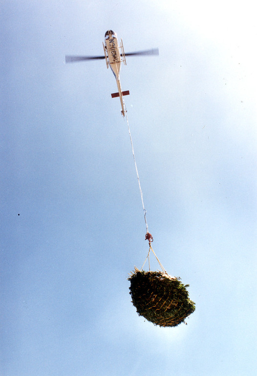 . A helicopter lifts out some of the marijuana plants seized on September 26, 1991 in a raid in the Angeles National Forest.   L.A. Daily News file photo