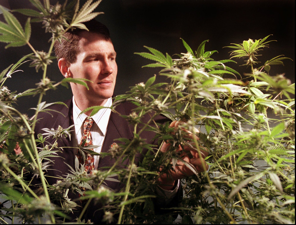 . Jeff Jones, executive director and co-founder of the Oakland Cannabis Buyers Cooperative, examines marijuana plants Wednesday, July 8, 1998, at the cooperative in Oakland, Calif. The Oakland City Council has approved a policy allowing medical marijuana users to stock a 1 1/2-pound supply of the drug, in defiance of a one-ounce restriction set by the state attorney general. (AP Photo/Ben Margot)