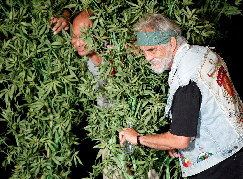 """. Comedians Cheech Marin, left, and Tommy Chong pose for photographers during a press conference announcing their upcoming tour \""""Cheech & Chong: Light Up America\"""" in West Hollywood, Calif. on Wednesday, July 30, 2008. (AP Photo/Matt Sayles)"""