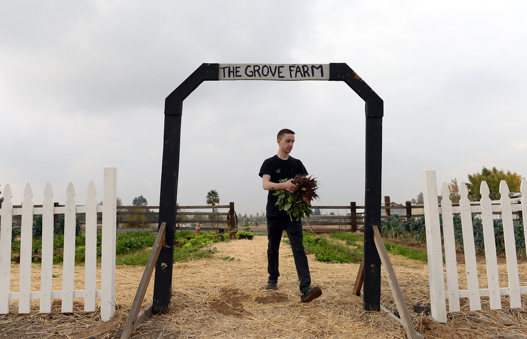 . Cook, Nick Loewy, of The Lounge 22 Bistro & Bar in Redlands, leave The Grove School Farm after picking produce for the restaurant, Tuesday morning in Redlands, Nov. 19, 2013. The restaurant started working with the middle school last week for their produces needs and in the future will use the schools facilities to grow the majority of their own produce. (John Valenzuela/Staff Photographer)