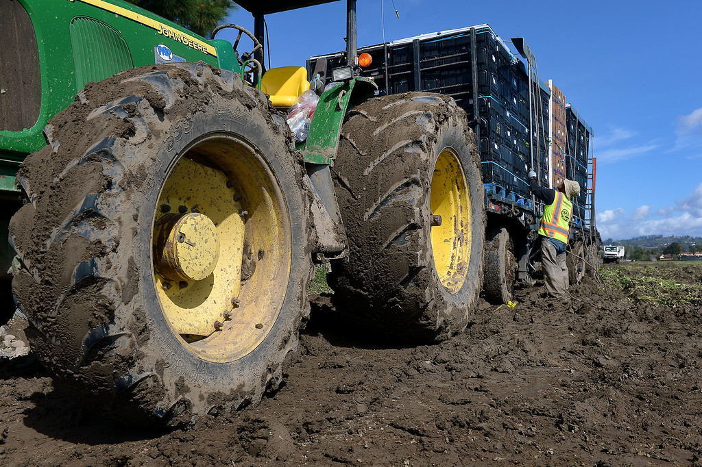 . Boxes of celery are prepared for transport in a muddy field in Camarillo, Thursday, February 27, 2014. (Photo by Michael Owen Baker/L.A. Daily News)