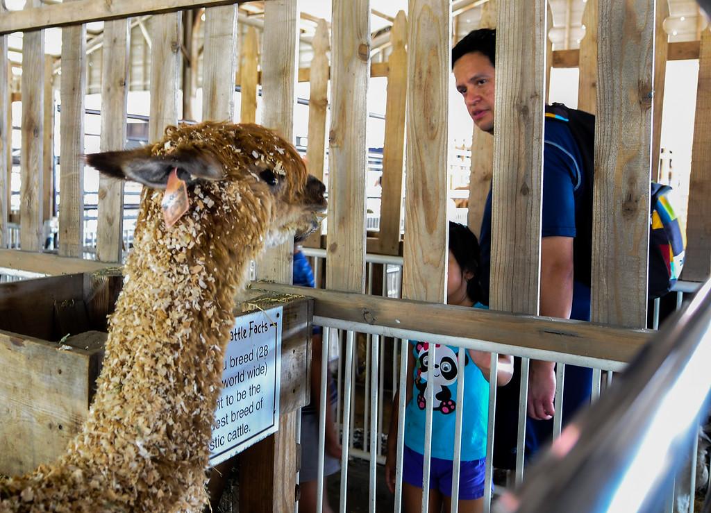 . Fair-goers visit with livestock at the 91st annual Los Angeles County Fair in Pomona on Sept. 2, 2013. The fair will run through September 29. (Rachel Luna / San Bernardino Sun)