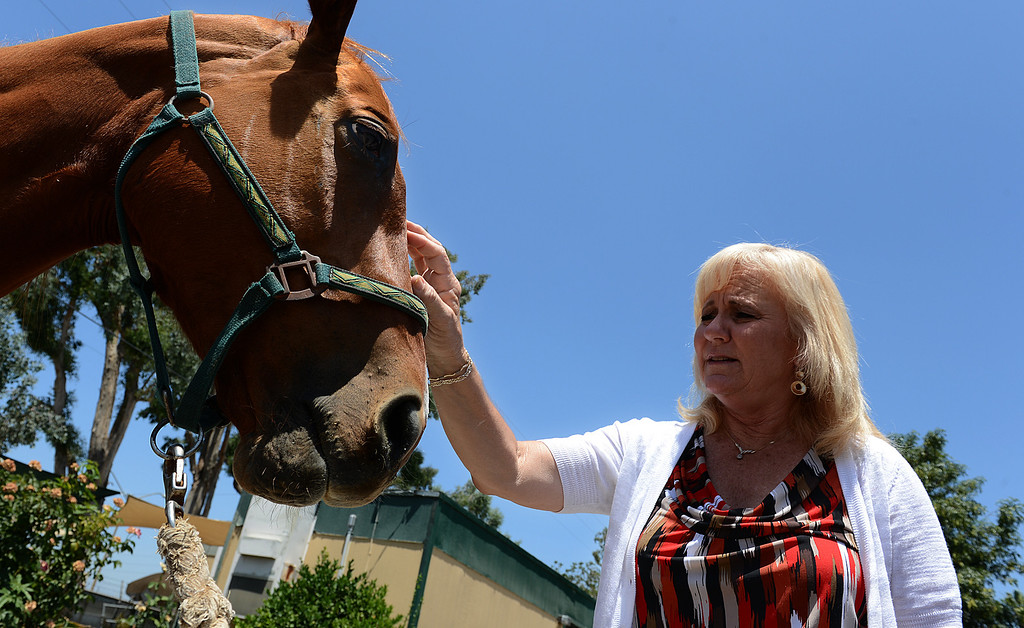 . Debi Shuker, interim manager for the San Bernardino City Animal Shelter, pets Sunny Dayz. The horse is looking for her owner at a San Bernardino animal shelter, after police found her lost on San Bernardino streets. (Rick Sforza/The Sun, San Bernardino)