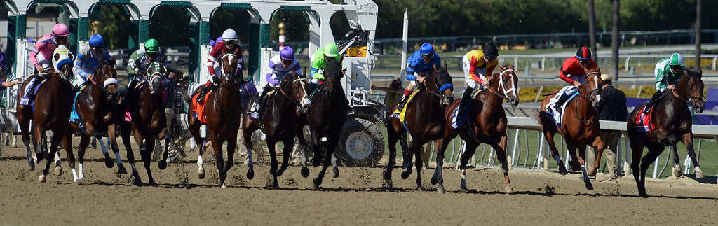 ". The start of the race as Jockey Javier Castellano atop ""Ria Antonia\"" (5) wins the fourth race during the Breeders\' Cup at Santa Anita Park in Arcadia, Calif., on Saturday, Nov. 2, 2013.    (Keith Birmingham Pasadena Star-News)"