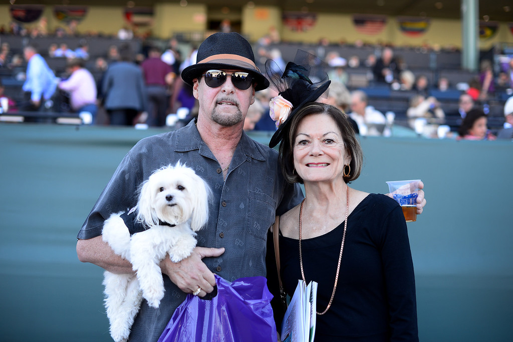 """. Thomas Smith and his fiancé Cathy Heywood and their service dog Munchie, of San Bernadino, during the Breeders\' Cup at Santa Anita Park in Arcadia Friday, November 1, 2013. Heywood says the service dog \""""keeps them calm.\"""" (Photo by Sarah Reingewirtz/Pasadena Star-News)"""