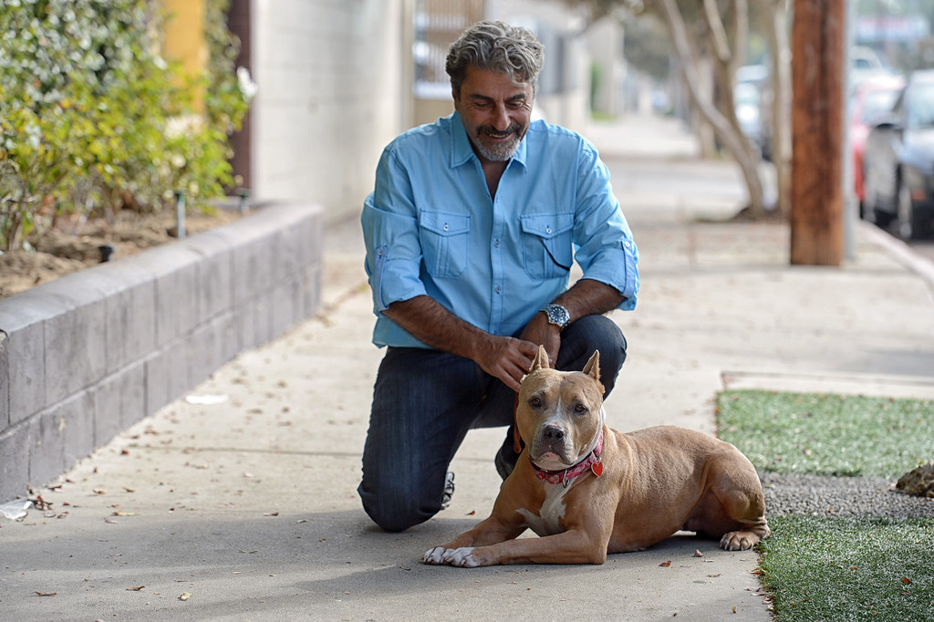 ". Bobby Dorafshar, owner of K9s Only, works with Roxy, a 2-year-old, female that is in need of a new home. Roxy is one of five of the first dogs in the ""Pay It Forward Scholarship\"" program. Dorafsha has launched  \""Pay It Forward Scholarship\"" program to train shelter dogs who need some help with behaviors to find new homes. K9s Only will board, train and care for five selected dogs from area rescues for a period of six weeks, four times a year, all free of charge. Each dog will go through the K9s Only companion obedience training program, tailored to meet each dog�s individual needs, providing socialization, education and patience. Dogs will receive a complete grooming before returning to the rescue organization for placement. Once placed, their new guardian will be offered four follow up sessions to educate them on training techniques and problem solving tools.  (Photo by Hans Gutknecht/Los Angeles Daily News)"