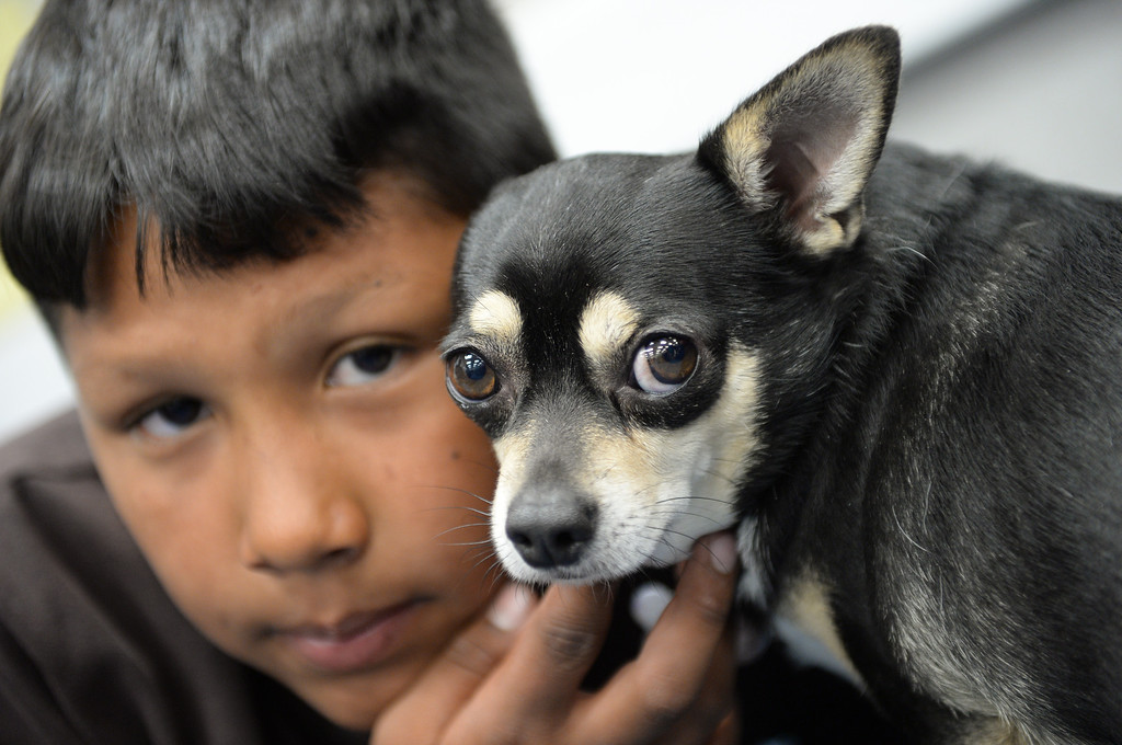 . Diego\'s Dudes lunchtime reading club at Felton Elementary School in Lennox. Teacher Alex Carrera brings her Chihuahua Diego to class as a mascot to help boys improve reading skills. Jose Cervantes with Diego. Photo by Brad Graverson 5-15-13