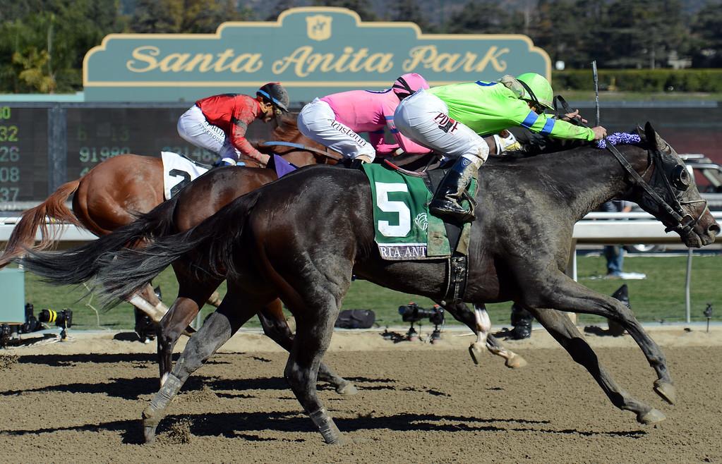 ". Jockey Javier Castellano atop \""Ria Antonia\"" (5) wins the fourth race during the Breeders\' Cup at Santa Anita Park in Arcadia, Calif., on Saturday, Nov. 2, 2013.    (Keith Birmingham Pasadena Star-News)"