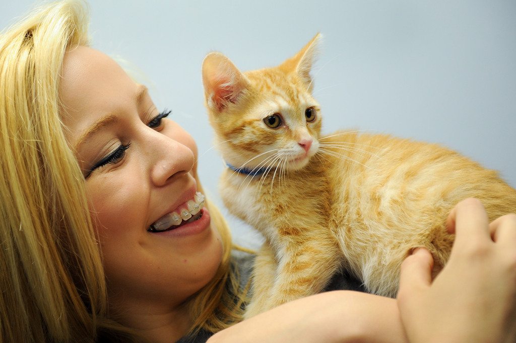 ". Adoption specialist Valeria Avila pets ""Pinocchio,\"" a two-month-old orange tabby, available for adoption at Best Friends Pet Adoption in Mission Hills, Wednesday, July 3, 2013. (Michael Owen Baker/L.A. Daily News)"
