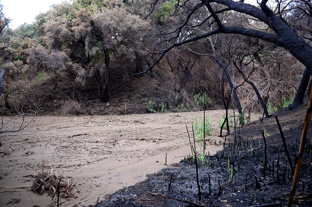 . A distinct line separates the Colby Fire burn from the mud in a low head basin above Rainbow Drive in Glendora Saturday, March 1, 2014. (Photo by Sarah Reingewirtz/Pasadena Star-News)
