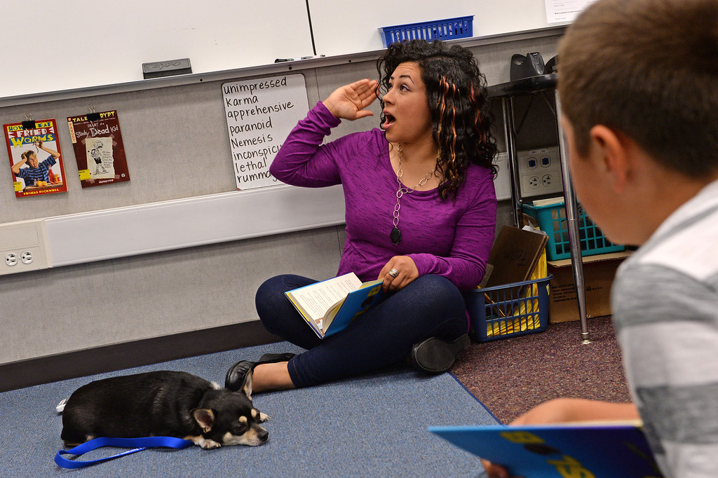 . Diego\'s Dudes lunchtime reading club at Felton Elementary School in Lennox. Fourth grade teacher Alex Carrera brings her Chihuahua Diego to class as a mascot to help boys improve reading skills. Photo by Brad Graverson 5-15-13